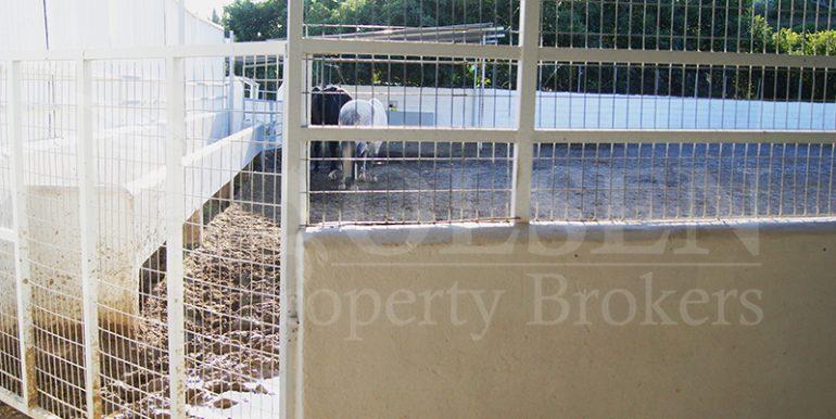 SCharming Equestrian Property